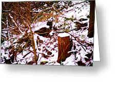 Snow And Tree Trunk Greeting Card