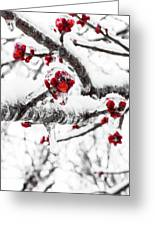 Snow Berry Greeting Card