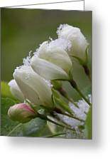 Snow Blossoms Greeting Card