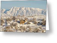 Snow-buck In Wyoming Greeting Card