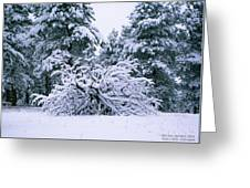 Snow Burdened Tree In The Flatirons Greeting Card