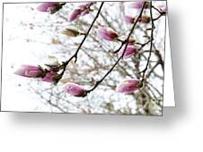Snow Capped Magnolia Tree Blossoms 2 Greeting Card