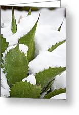 Snow Covered Agave Greeting Card