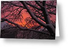 Snow Covered Branches At Sunset Greeting Card