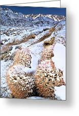 Snow Covered Cactus Below Mount Whitney Eastern Sierras Greeting Card