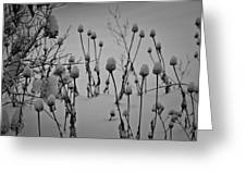 Snow Covered Coneflowers Greeting Card