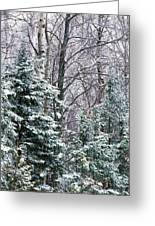 Snow-covered Forest, Wisconsin, Usa Greeting Card