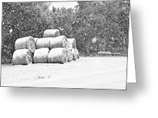 Snow Covered Hay Bales Greeting Card