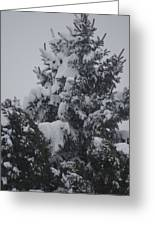 Snow Covered Pine Greeting Card