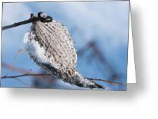 Snow-covered Pod Greeting Card