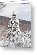 Snow Covered Spruce Greeting Card