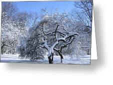 Snow-covered Sunlit Apple Trees Greeting Card