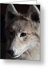 Snow Coyote Greeting Card