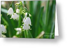Snow Drop Lily Greeting Card