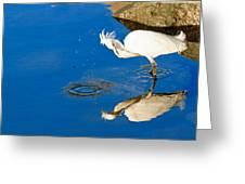 Snowy Egret 6 Greeting Card