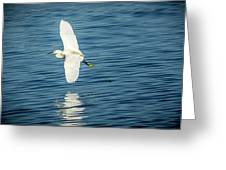 Snow Egret In Flight Greeting Card