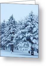Snow Flocked Pines Greeting Card