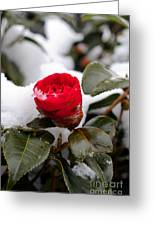 Snow Flower Greeting Card