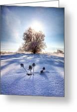 Snow Flowers Greeting Card