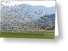 Snow Geese Exodus Greeting Card