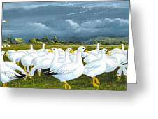 Snow Geese Gathering Greeting Card
