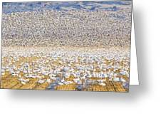 Snow Geese Take Off 1 Greeting Card