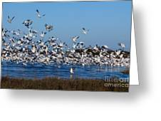 Snow Geese Takeoff I Greeting Card