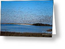Snow Geese Takeoff Iv Greeting Card