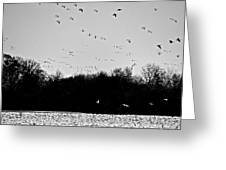 Snow Geese Winter Home In Delaware Greeting Card