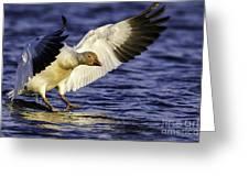 Snow Goose2 Greeting Card