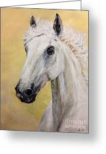 Snow White Horse  Greeting Card
