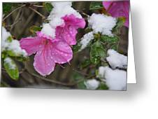 Snow In Houston Greeting Card