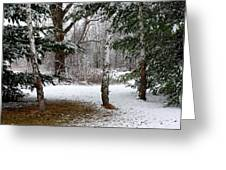 Snow In Pines Greeting Card