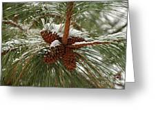 Snow In The Pine Greeting Card