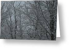 Snow In The Woods Greeting Card