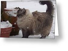 Snow Kitty Greeting Card