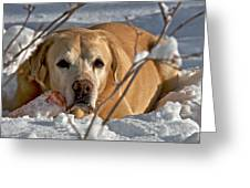Snow Lab Greeting Card