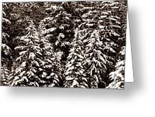Snow-laden Forest Greeting Card