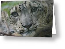 Snow Leopard 10 Greeting Card