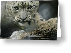 Snow Leopard 11 Greeting Card