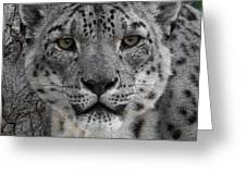 Snow Leopard 5 Posterized Greeting Card