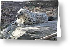 Snow-leopard Greeting Card