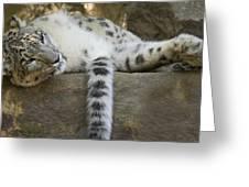 Snow Leopard Nap Greeting Card