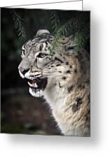 Snow Leopard Portrait Greeting Card