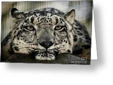 Snow Leopard Upclose Greeting Card