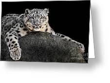 Snow Leopard Xxii Greeting Card