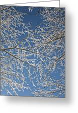Snow Lined Limbs Greeting Card