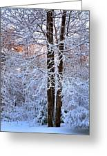 Snow Maple Morning Greeting Card