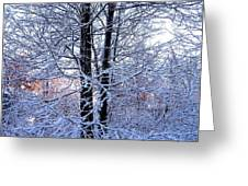Snow Maple Morning Landscape Greeting Card