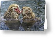 Snow Monkey Kisses Greeting Card